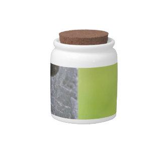 Blackbird parent in hole of nest box candy jar