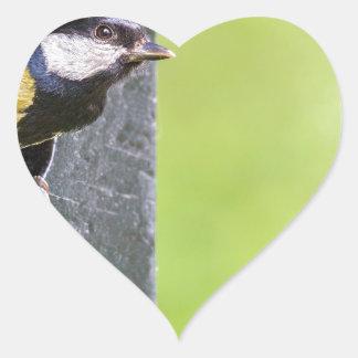 Blackbird parent in hole of nest box heart sticker