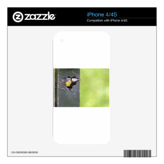 Blackbird parent in hole of nest box iPhone 4S decals