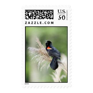Blackbird stamp