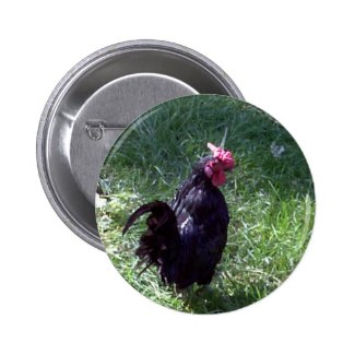Blackbird the Black Rooster Button