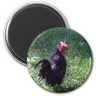Blackbird the Rooster Magnet