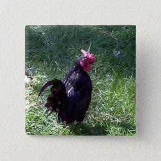 Blackbird the Rooster Pinback Button