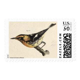 Blackburnian Warbler Postage