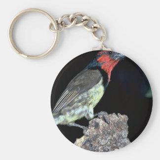 Blackcollared Barbet Key Chain
