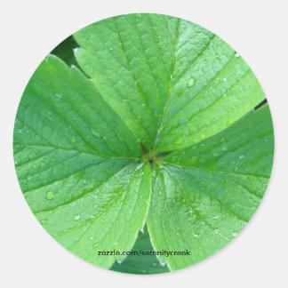 Blackcurrant Leaves Sticker
