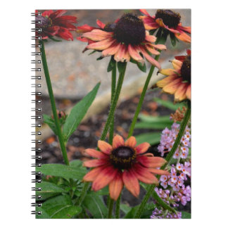 Blackeye coloreado otoño Susans Cuaderno