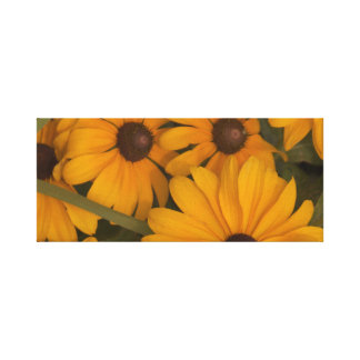 Blackeyed Susans on wrapped canvas. Canvas Print