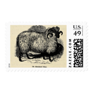 Blackface Sheep Stamps