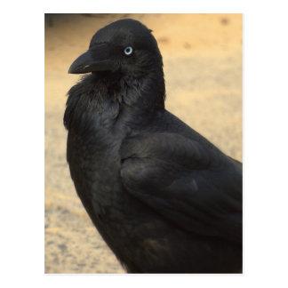 blackfeather beek postcard