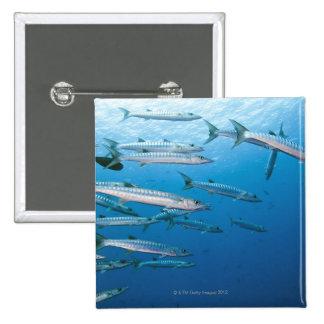Blackfin Barracuda Pins