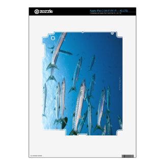 Blackfin Barracuda iPad 3 Skin