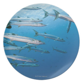 Blackfin Barracuda Melamine Plate