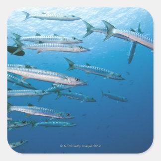 Blackfin Barracuda Sticker