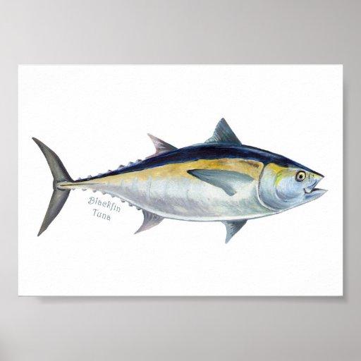 Blackfin Tuna fish poster.