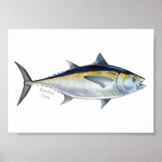 Blackfin Tuna fish poster. Poster