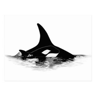 Blackfish Jnr Postcard