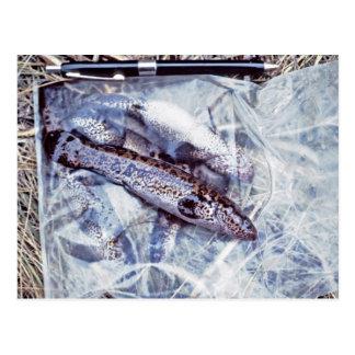 Blackfish Postcard