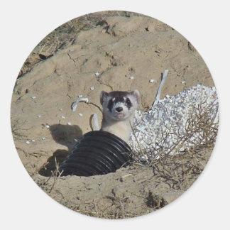 Blackfooted Ferret Classic Round Sticker