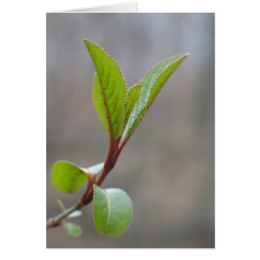 Blackhaw Notecard Stationery Note Card