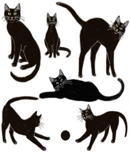 14f206ab425 Cat Craft Tissue Paper | Zazzle
