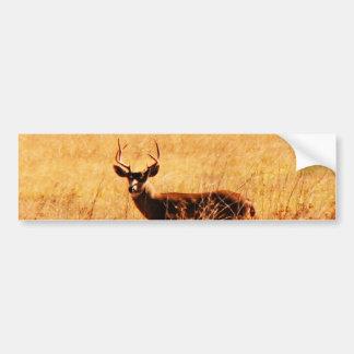 Blacktail Buck Bumper Sticker