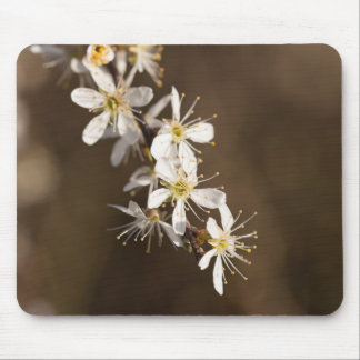 Blackthorn Blossom Mouse Pad