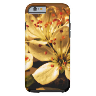 Blackthorn Blossom Tough iPhone 6 Case