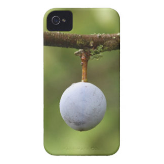 Blackthorn Fruit iPhone 4 Cover