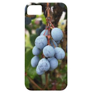 Blackthorn fruit iPhone SE/5/5s case