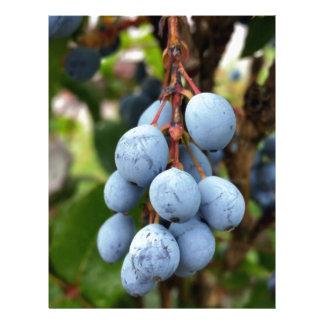 Blackthorn fruit letterhead