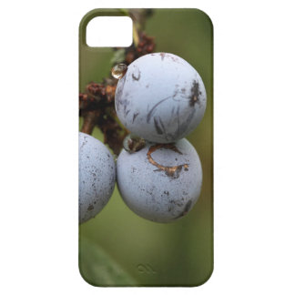 Blackthorn Fruits iPhone SE/5/5s Case