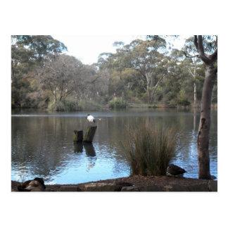 Blackwood SA del lago Wittunga Postales