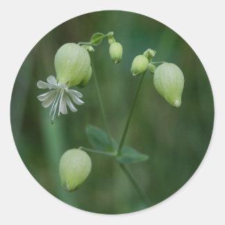 Bladder Campion White Wildflower Round Stickers