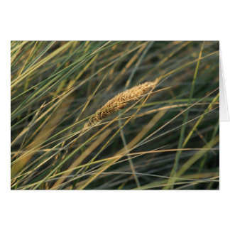 blade of grass greeting card