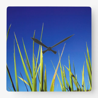 Blades of Grass against a clear blue summer sky Square Wall Clock