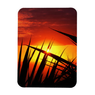 Blades of grass sunset beautiful scenery magnet