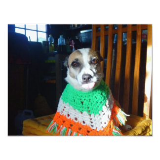 Blaheen of the roads dog Nuala in her new  poncho 4.25x5.5 Paper Invitation Card