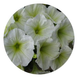 """Blanco amarillo de la petunia invitación 5.25"""" x 5.25"""""""