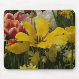 Blanco amarillo rojo de los tulipanes del jardín alfombrillas de ratón
