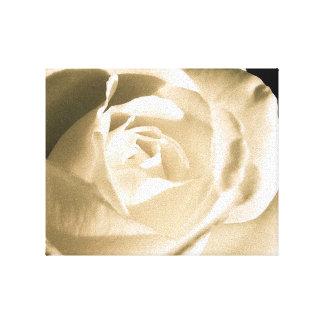 Blanco color de rosa lona envuelta para galerías