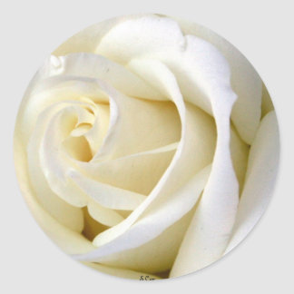Blanco color de rosa pegatina redonda