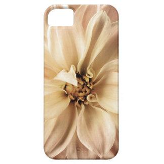 Blanco, crema, fondo de la dalia de Brown iPhone 5 Case-Mate Cárcasas