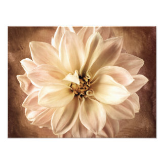 Blanco, crema, fondo de la dalia de Brown modifica Fotografía