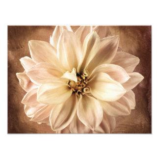 Blanco, crema, fondo de la dalia de Brown modifica Fotos