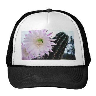 Blanco de la flor del cactus gorros