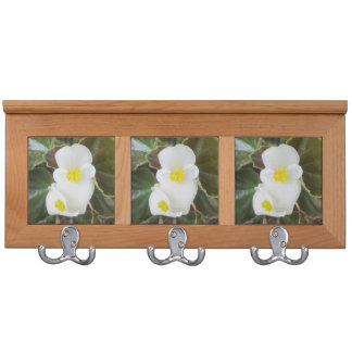 Blanco de la flor del jardín de la begonia