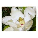 Blanco de la magnolia felicitación