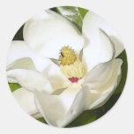 Blanco de la magnolia pegatina redonda