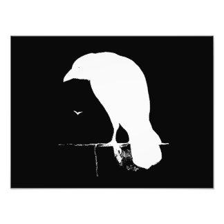 Blanco de la silueta del cuervo del vintage en el fotografía